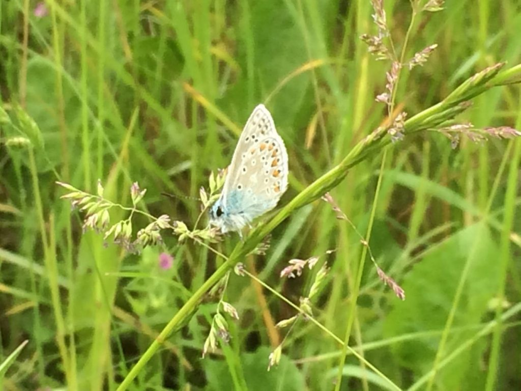 butterfly at manor farm